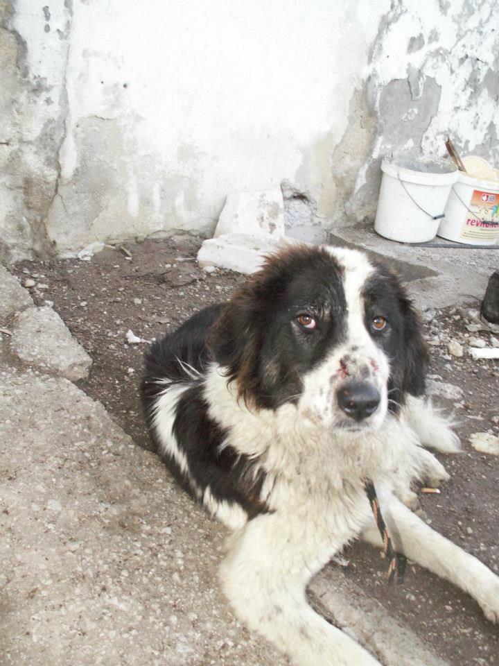 Auffanglager Gladno Polje: er wartet noch auf seine Rettung