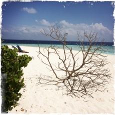 Dieser vertrocknete Baum faszinierte mich. Ich habe bei in allen Lichtverhältnissen fotografiert (Foto: balkanblogger)