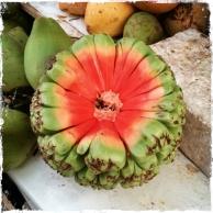 Es gibt viele Früchte ... (Foto: Balkanblogger)