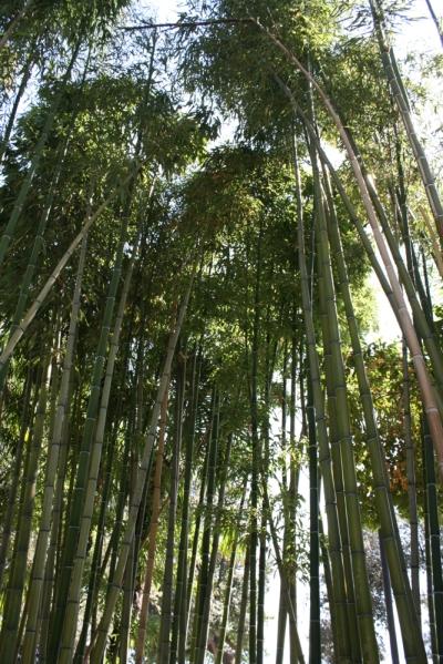 Im Angiolina-Park, dem Botanischen Garten, können exotische Pflanzen aus aller Welt besichtigt werden. Sehr beeindruckend ist die Bambus-Allee. (Foto: Balkanblogger)